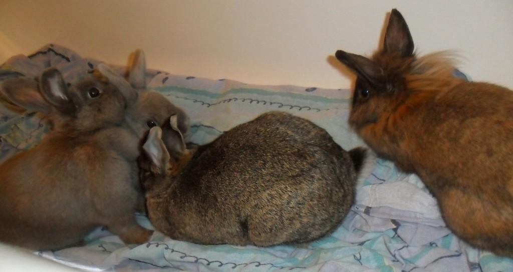Glück einer Kaninchengruppe