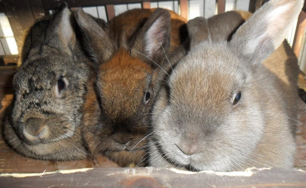 Im Kaninchenhaus