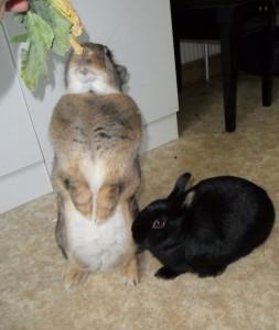 kaninchen ern hrung welche nahrung f r kaninchen. Black Bedroom Furniture Sets. Home Design Ideas