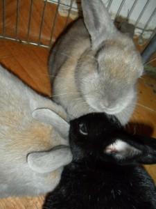 Kaninchen stecken Köpfe zusammen