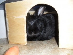 Kaninchenhaus