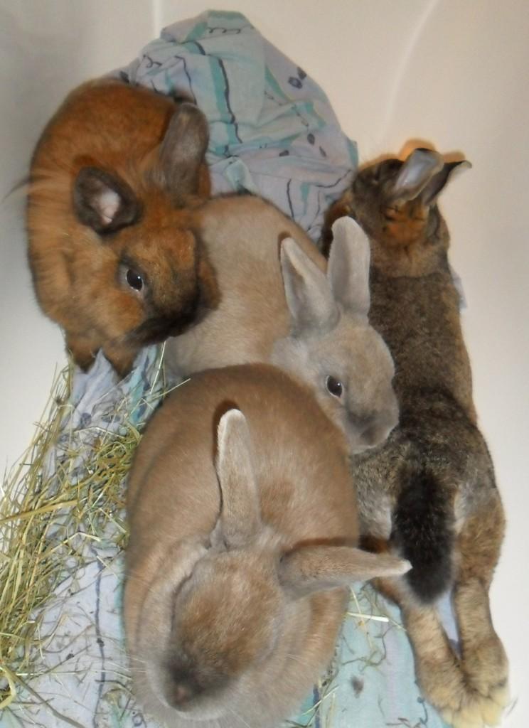 Zusammenführung in der Badewanne - mit entspanntem Kaninchen