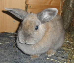 welche zweige für kaninchen