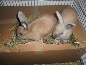 Kaninchen buddeln