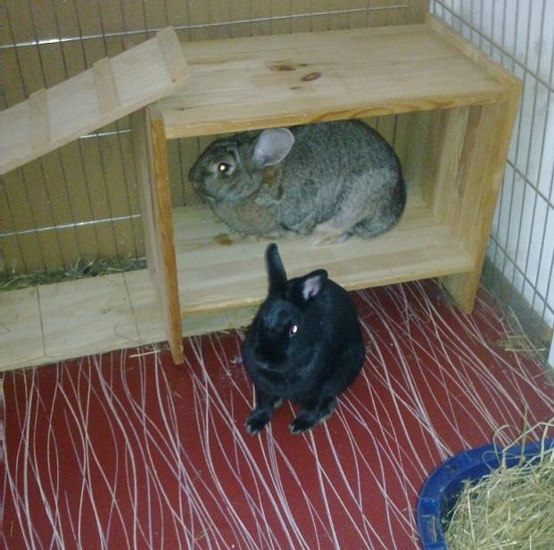 Basteln für die Kaninchen