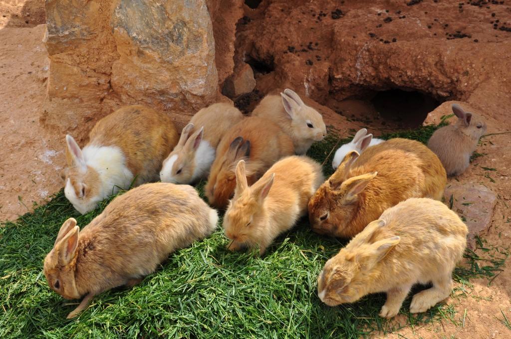 Kaninchen vor dem Kaninchenbau bzw. der Kaninchenhöhle