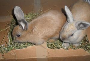 Kaninchen auf Heu
