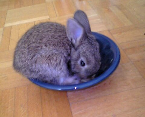 Clara als Kaninchenbaby