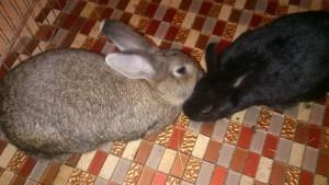 Kaninchenkuss