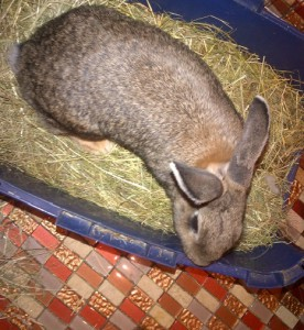 Kaninchentoilette