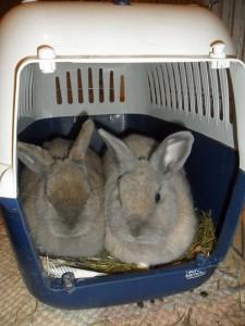 Transportkorb Kaninchen