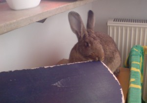 Kaninchen knabbern alles an