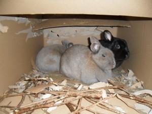 Unterschlupf Und Kaninchenhauser