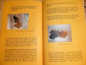 Kaninchenbuch Innenseite II