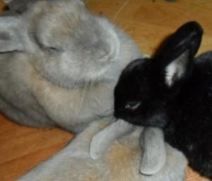 Glückliche Kaninchengruppe