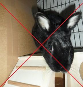 1 Kaninchen