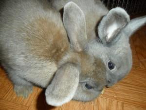 2 Kaninchen