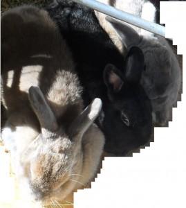 3 Kaninchen