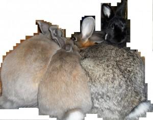 4 Kaninchen