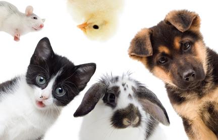 Kaninchen und andere Haustiere