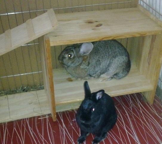 Unterhaltung für Kaninchen