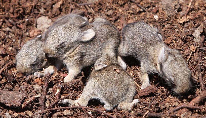 Neugeborene Kaninchen